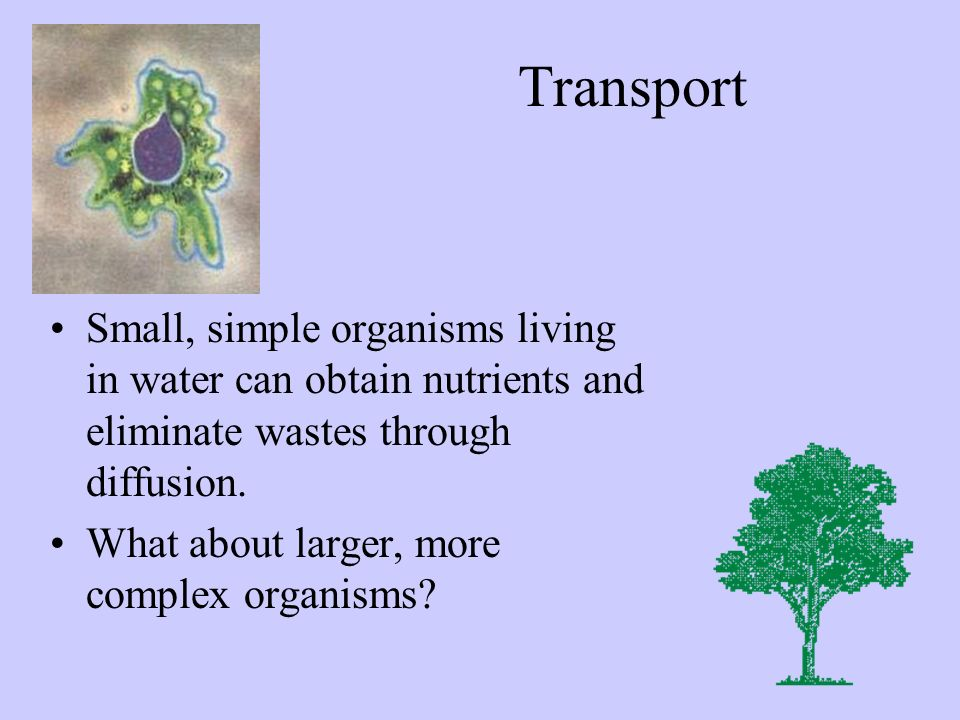 Transport Small, simple organisms living in water can obtain nutrients and eliminate wastes through diffusion.