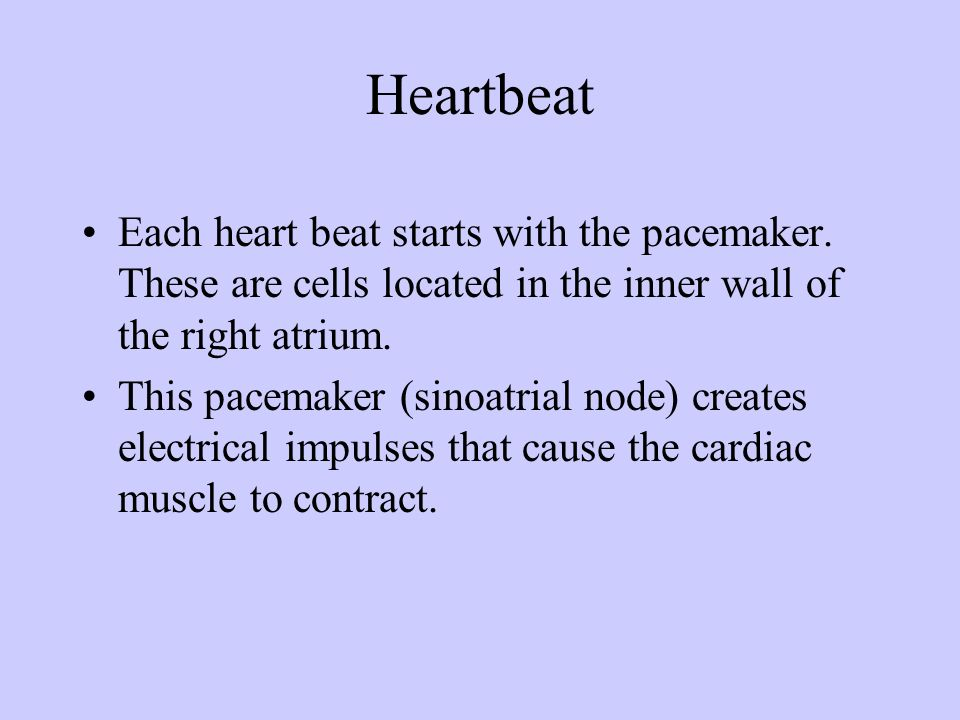 HeartbeatEach heart beat starts with the pacemaker. These are cells located in the inner wall of the right atrium.