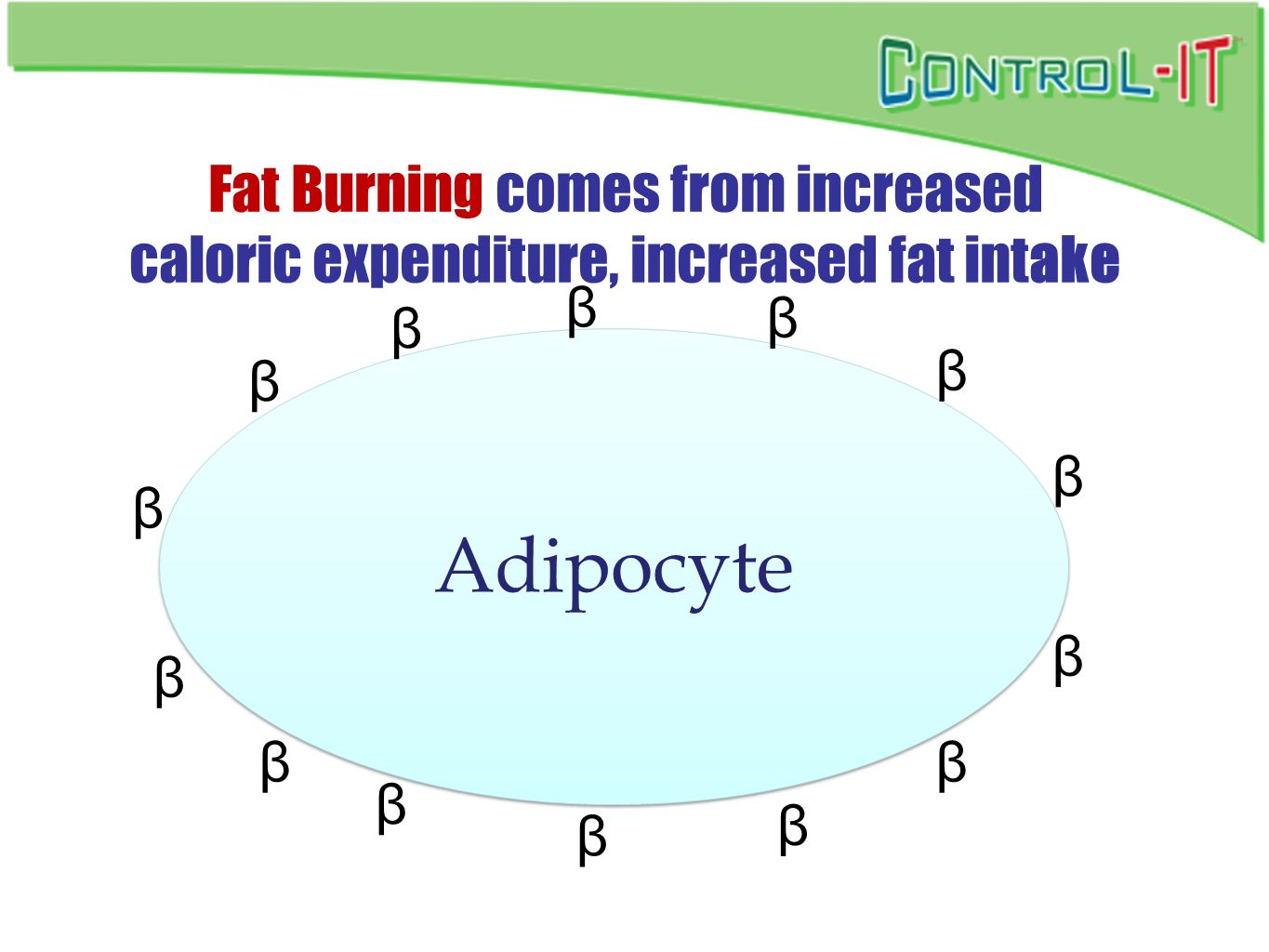 Fat Burning comes from increased caloric expenditure, increased fat intake
