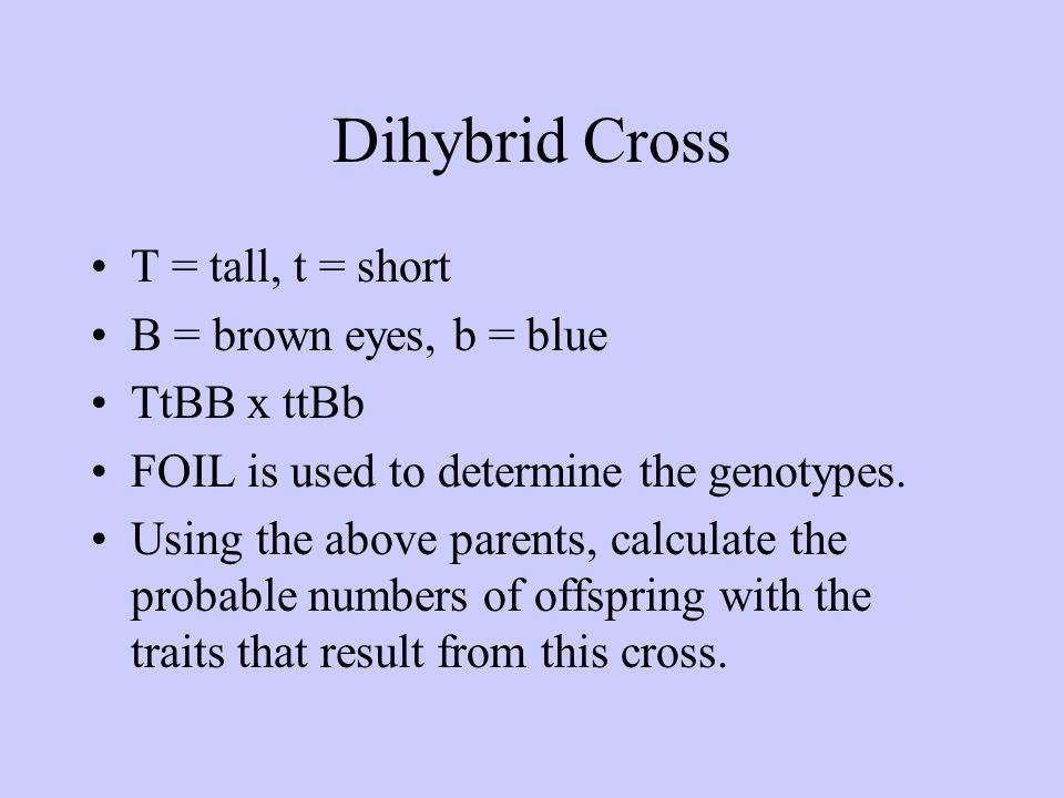 Dihybrid Cross T = tall, t = short B = brown eyes, b = blue