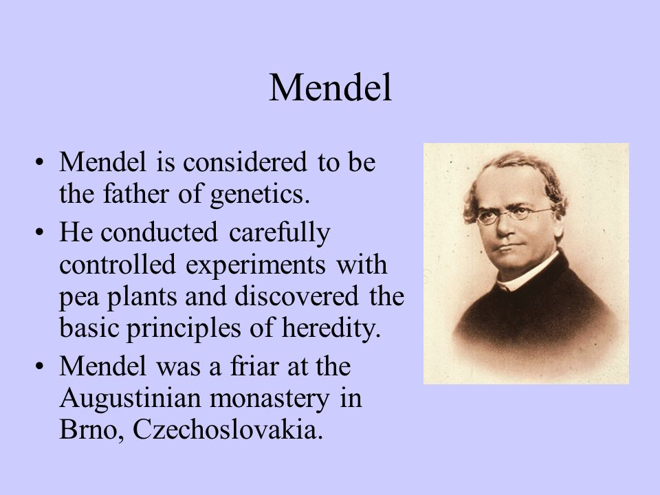 Mendel Mendel is considered to be the father of genetics.