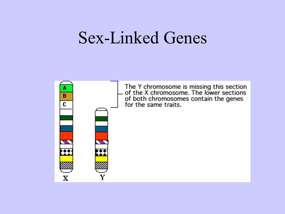 Sex-Linked Genes