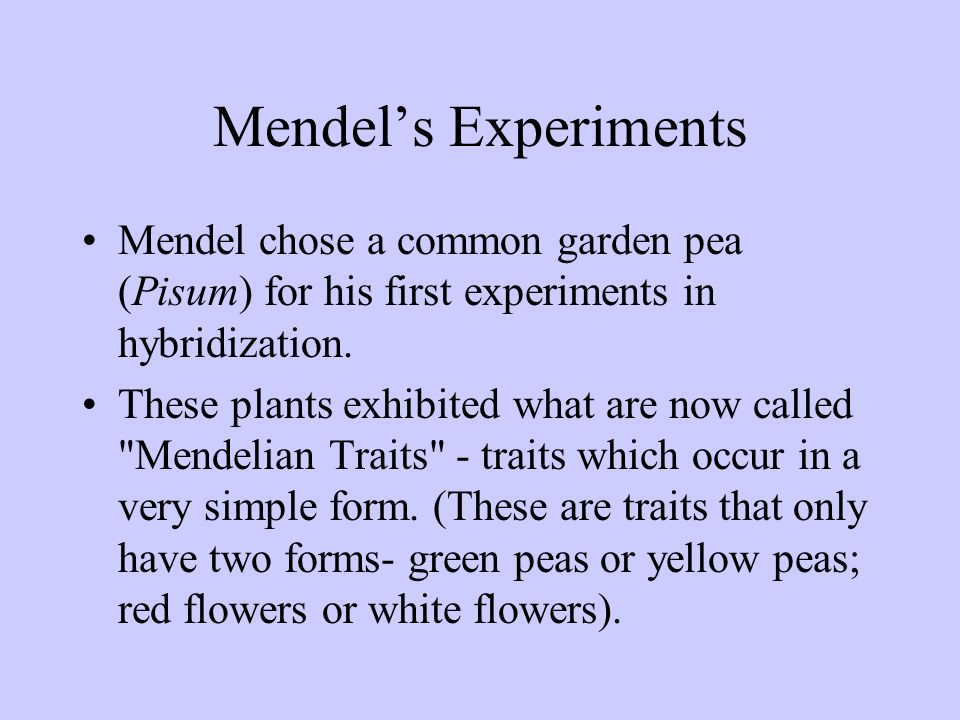 Mendel's Experiments Mendel chose a common garden pea (Pisum) for his first experiments in hybridization.