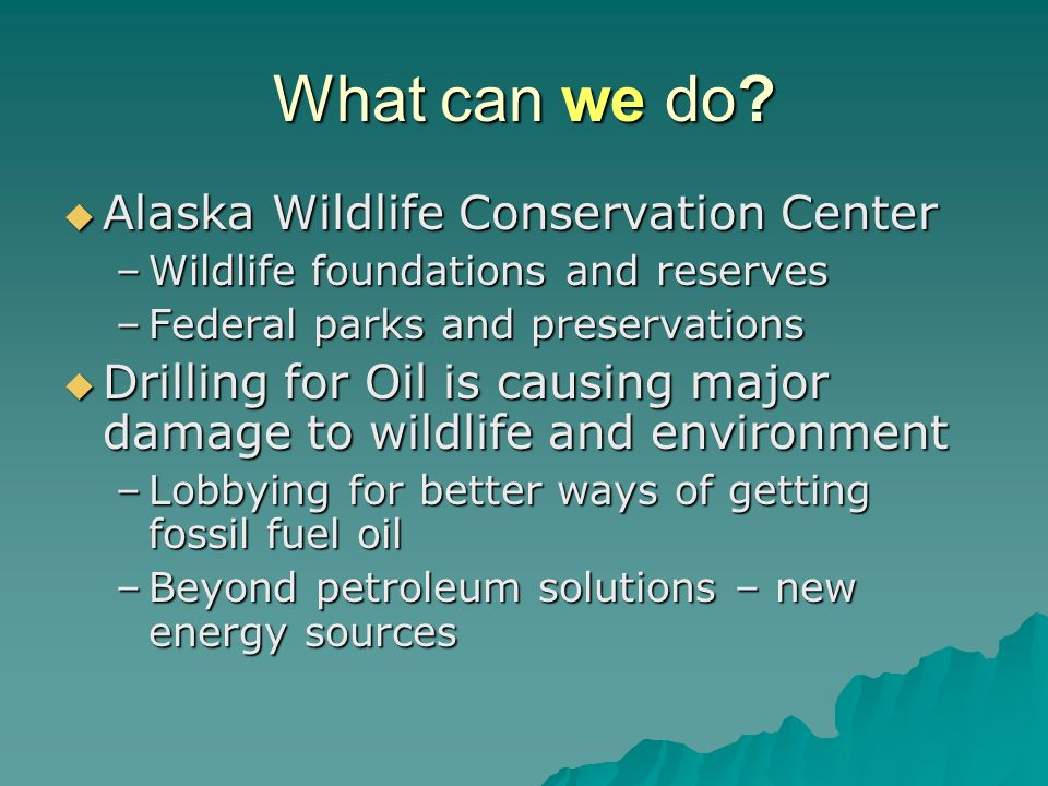 What can we do Alaska Wildlife Conservation Center