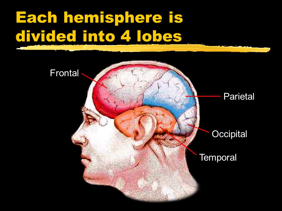 Each hemisphere is divided into 4 lobes