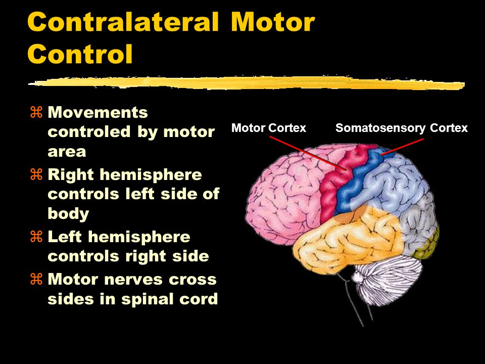 Contralateral Motor Control