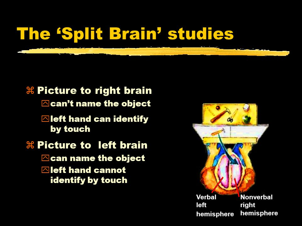 The 'Split Brain' studies