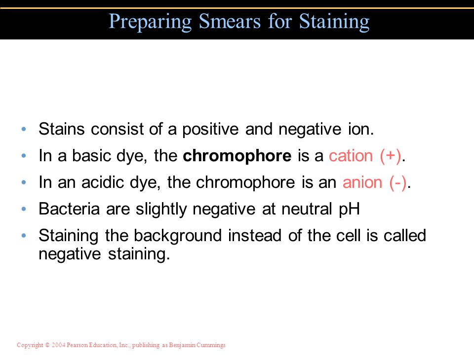 Preparing Smears for Staining