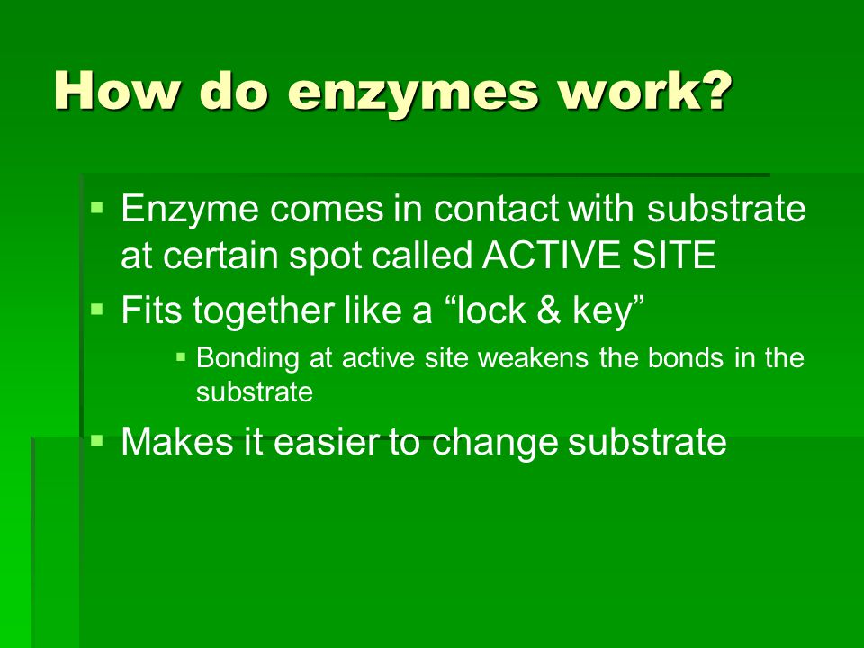 How do enzymes work Enzyme comes in contact with substrate at certain spot called ACTIVE SITE. Fits together like a lock & key