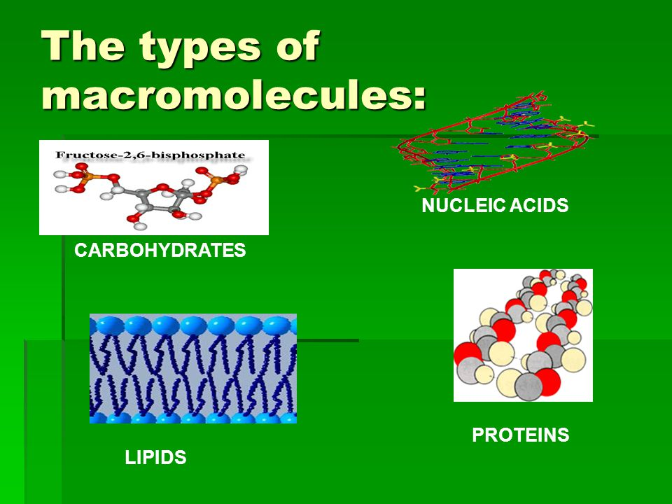 The types of macromolecules: