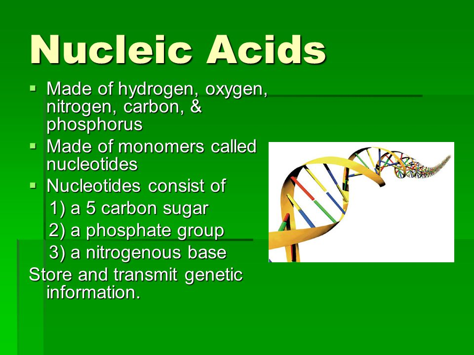 Nucleic Acids Made of hydrogen, oxygen, nitrogen, carbon, & phosphorus