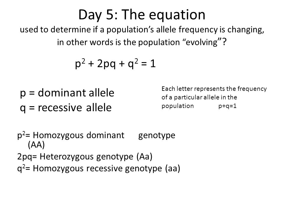 Day 5: The equation used to determine if a population's allele frequency is changing, in other words is the population evolving