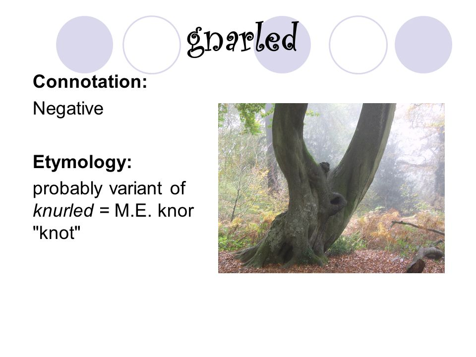 gnarled Connotation: Negative Etymology: