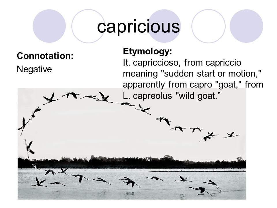capricious Etymology: Connotation: