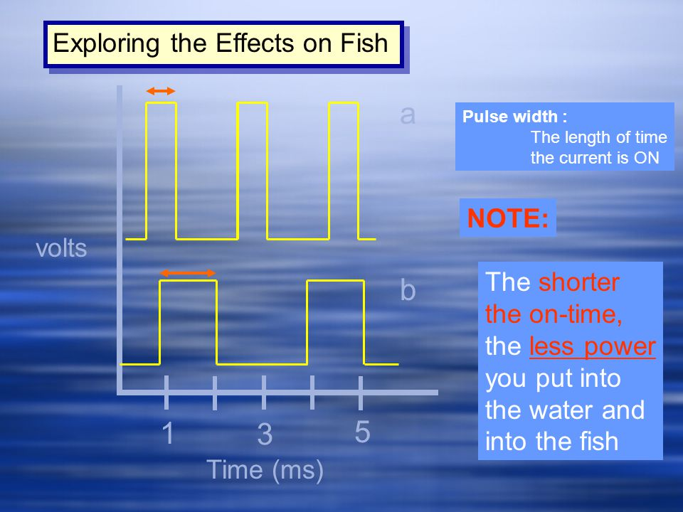 a b 1 3 5 Exploring the Effects on Fish NOTE: volts The shorter