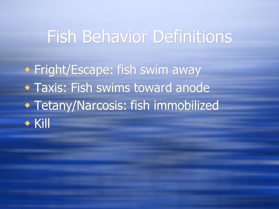 Fish Behavior Definitions