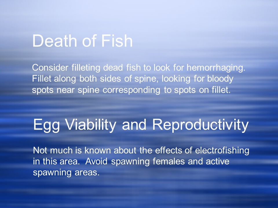 Death of Fish Egg Viability and Reproductivity