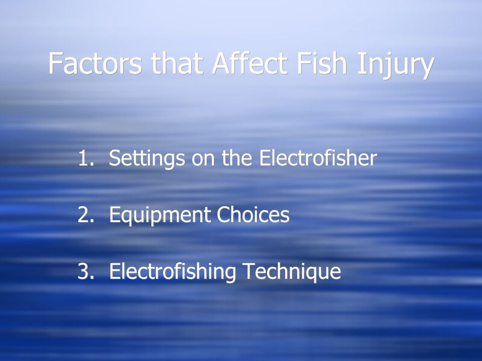 Factors that Affect Fish Injury