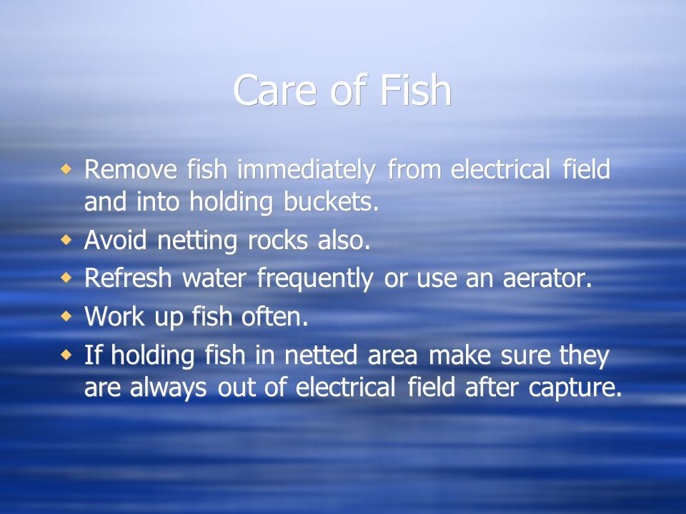 Care of Fish Remove fish immediately from electrical field and into holding buckets. Avoid netting rocks also.
