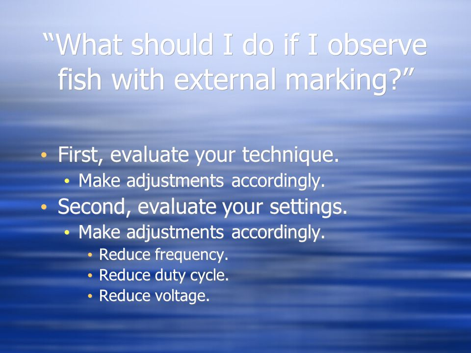 What should I do if I observe fish with external marking