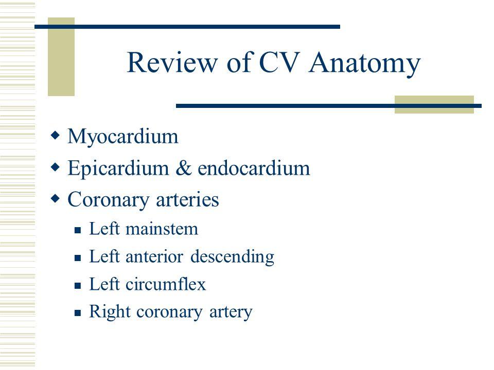 Review of CV Anatomy Myocardium Epicardium & endocardium