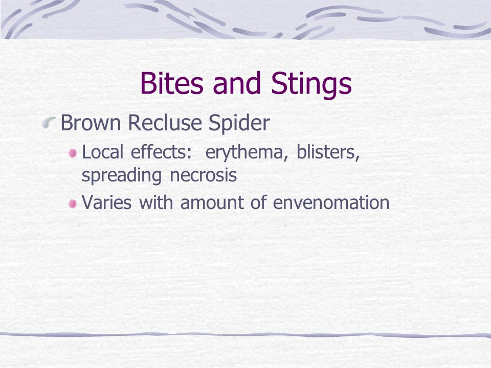 Bites and Stings Brown Recluse Spider