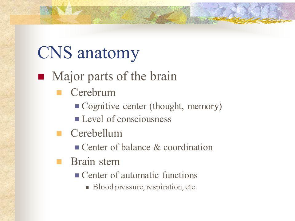 CNS anatomy Major parts of the brain Cerebrum Cerebellum Brain stem