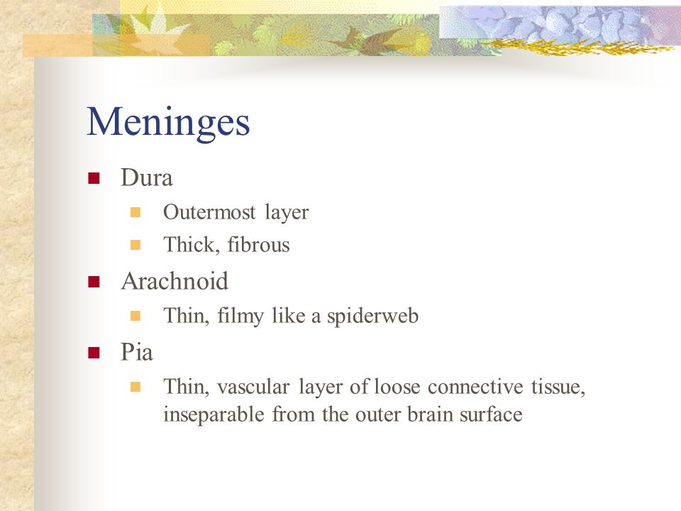 Meninges Dura Arachnoid Pia Outermost layer Thick, fibrous