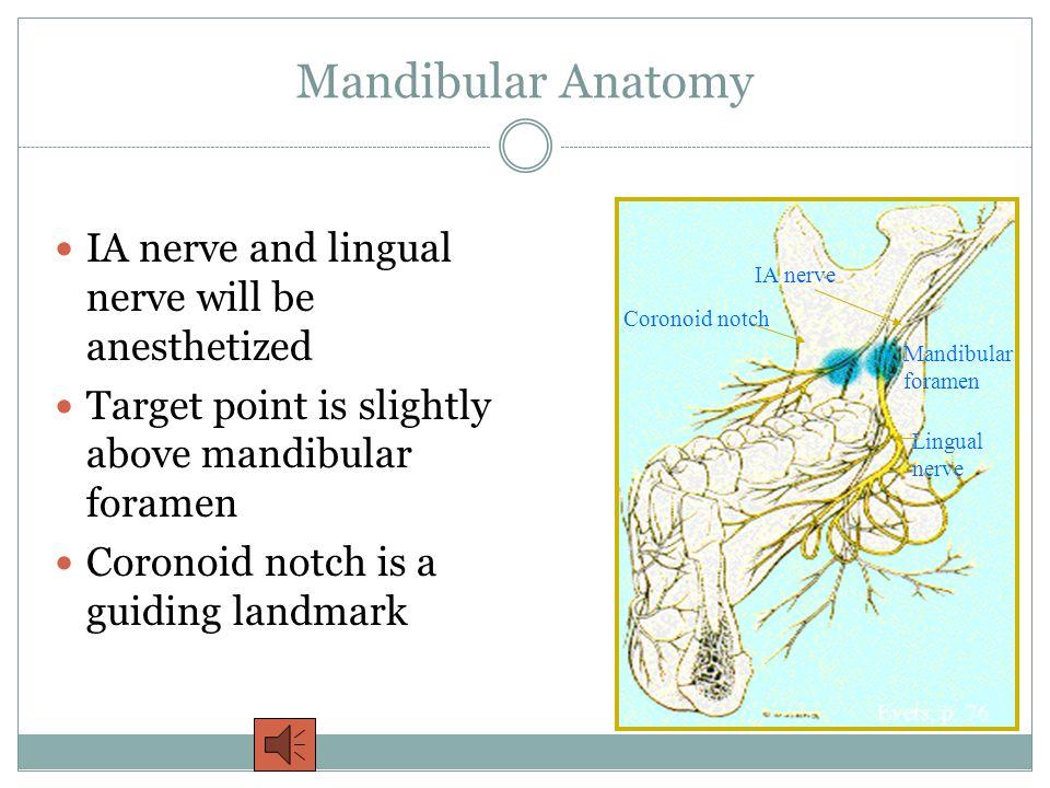 Mandibular Anatomy IA nerve and lingual nerve will be anesthetized