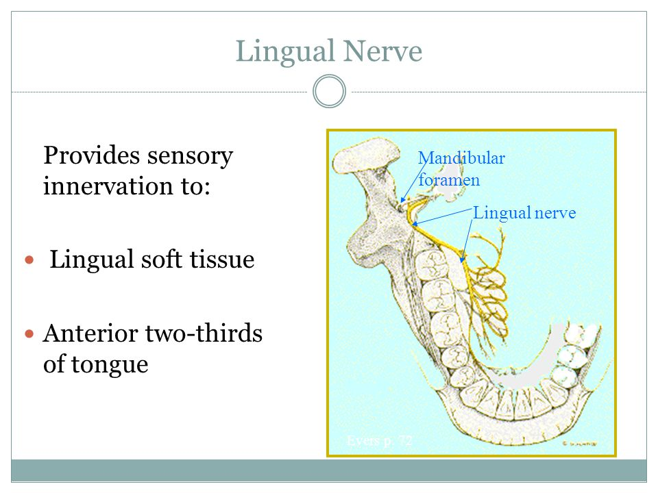 Lingual Nerve Provides sensory innervation to: Lingual soft tissue