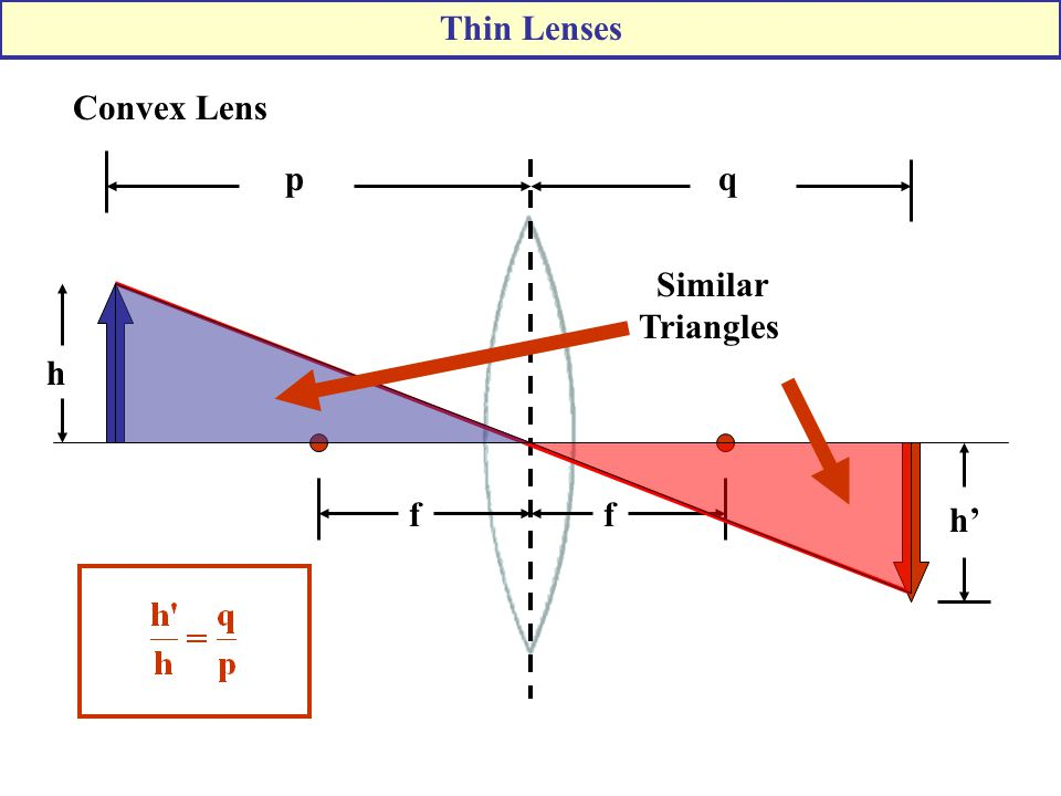 Thin Lenses Convex Lens p q Similar Triangles h f f h'