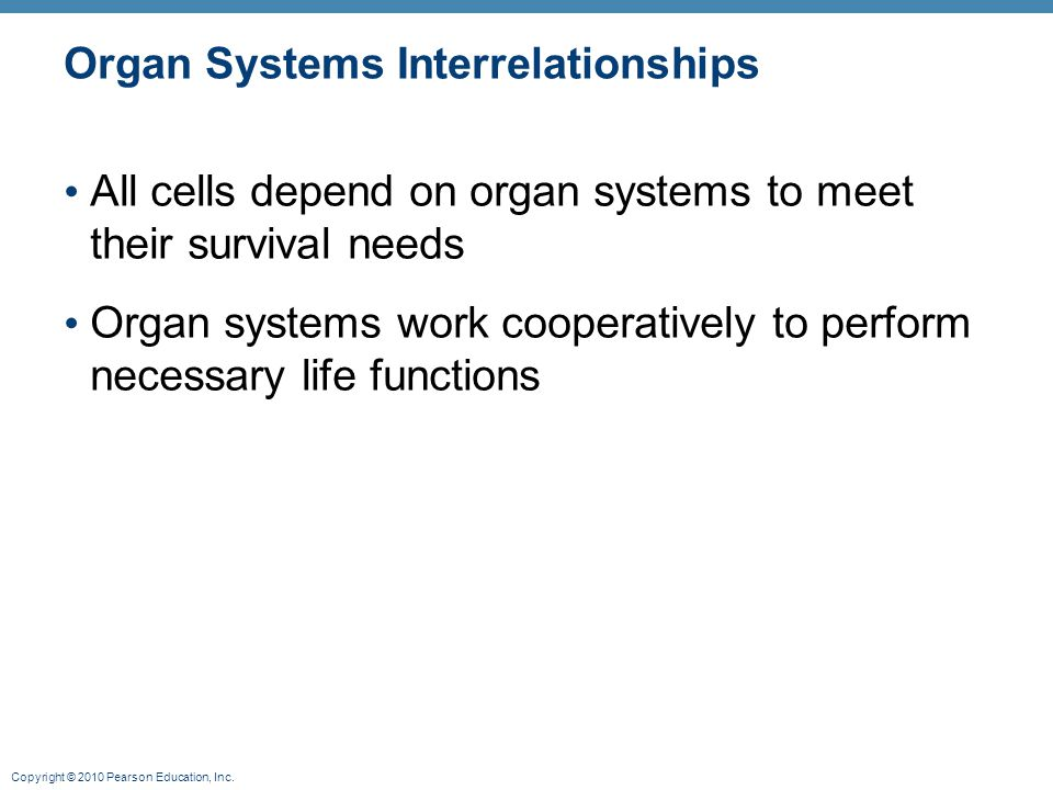 Organ Systems Interrelationships