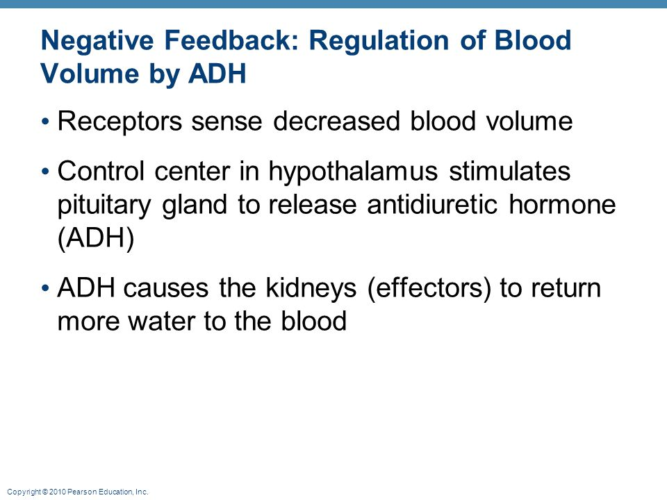 Negative Feedback: Regulation of Blood Volume by ADH