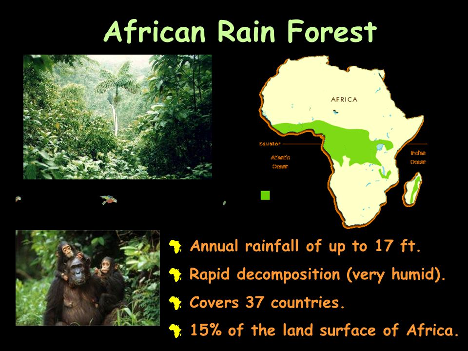 African Rain Forest Annual rainfall of up to 17 ft.