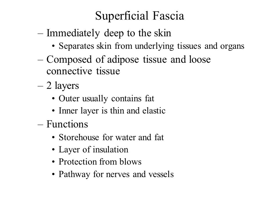 Superficial Fascia Immediately deep to the skin