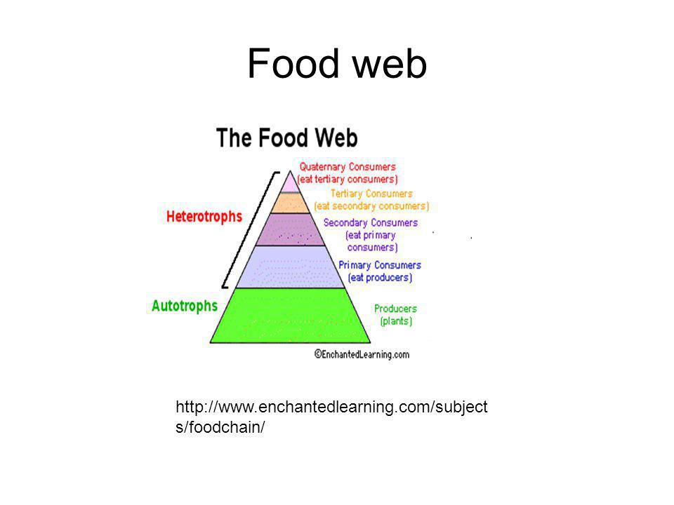 Food web http://www.enchantedlearning.com/subjects/foodchain/