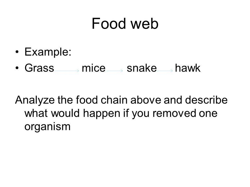 Food web Example: Grass mice snake hawk