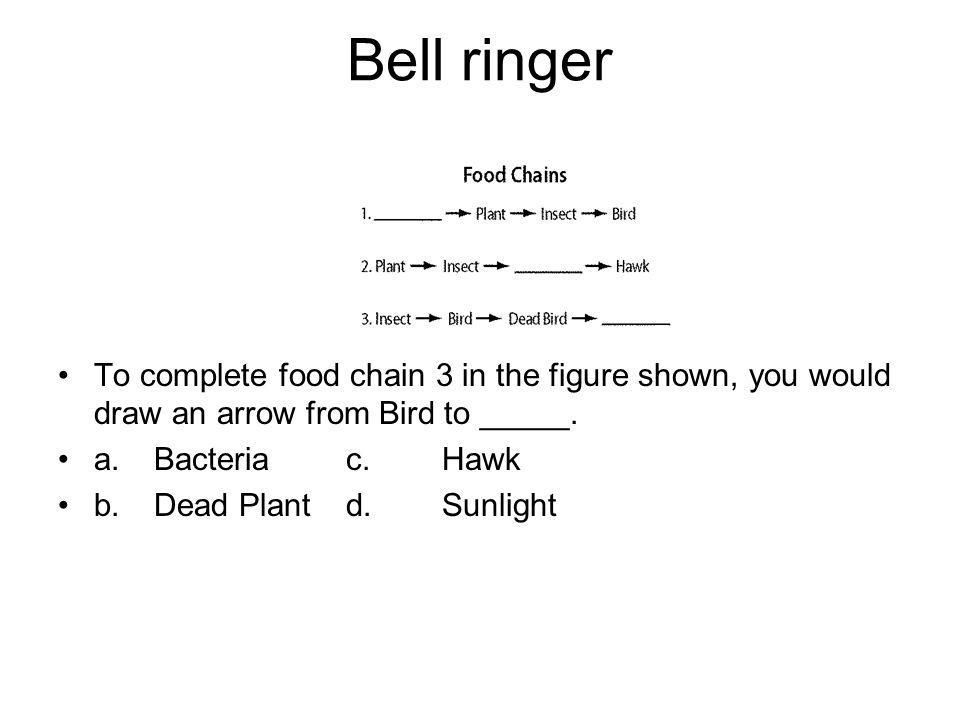 Bell ringer To complete food chain 3 in the figure shown, you would draw an arrow from Bird to _____.