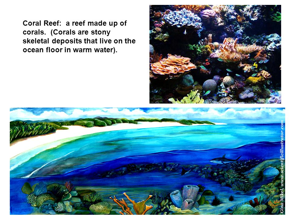 Coral Reef: a reef made up of corals