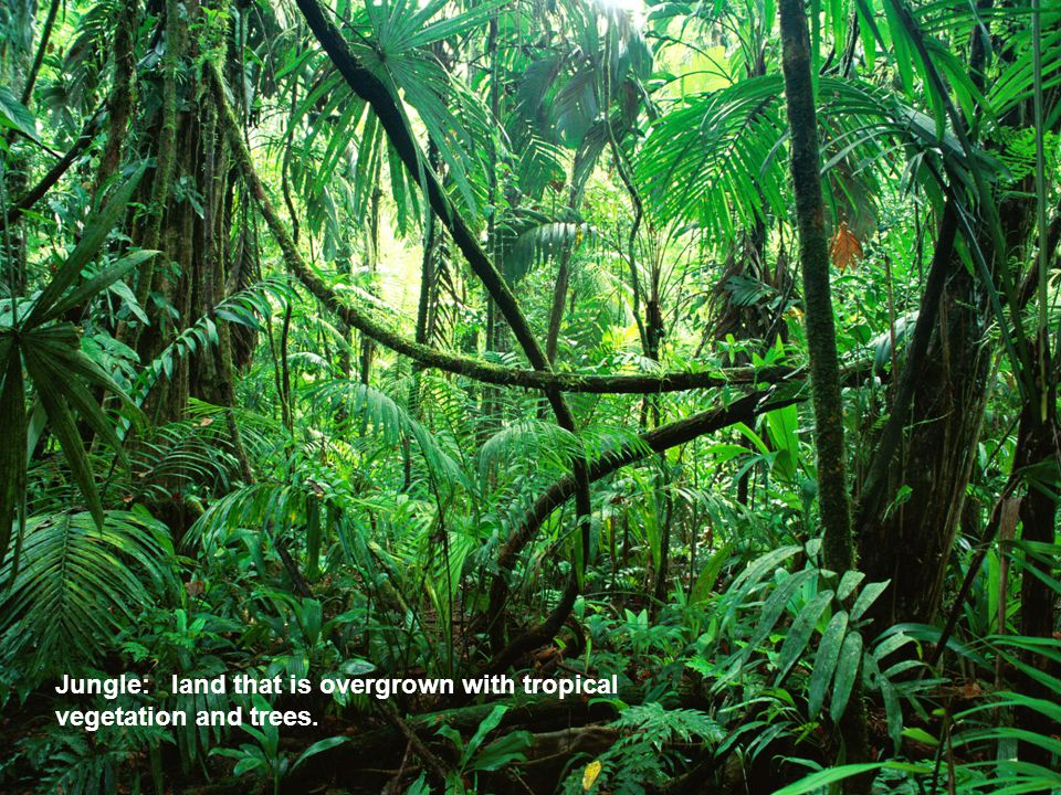Jungle: land that is overgrown with tropical vegetation and trees.