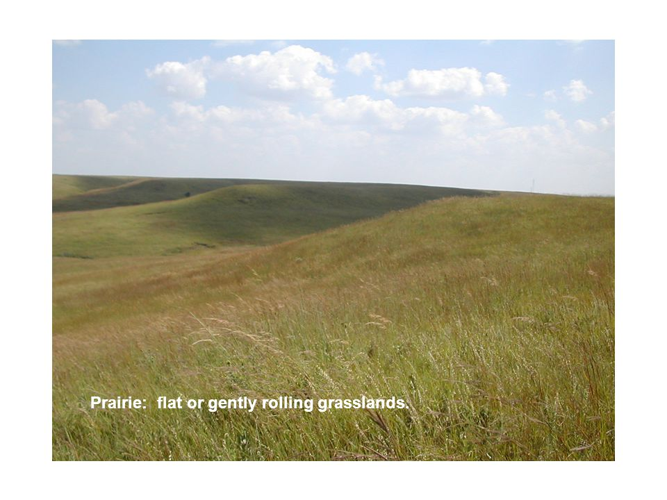 Prairie: flat or gently rolling grasslands.
