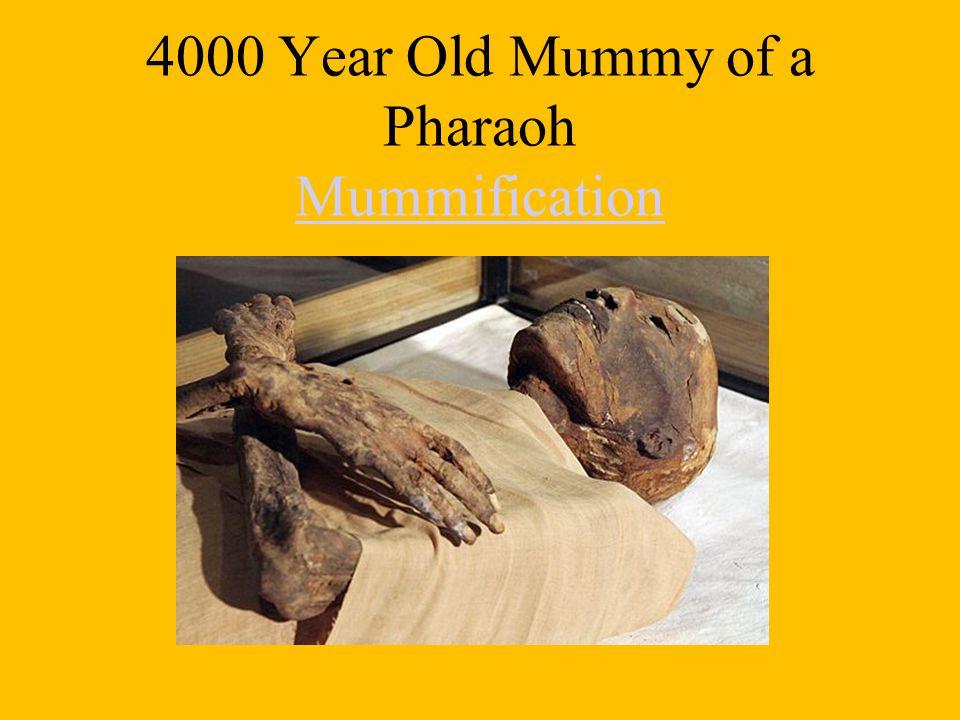 4000 Year Old Mummy of a Pharaoh Mummification