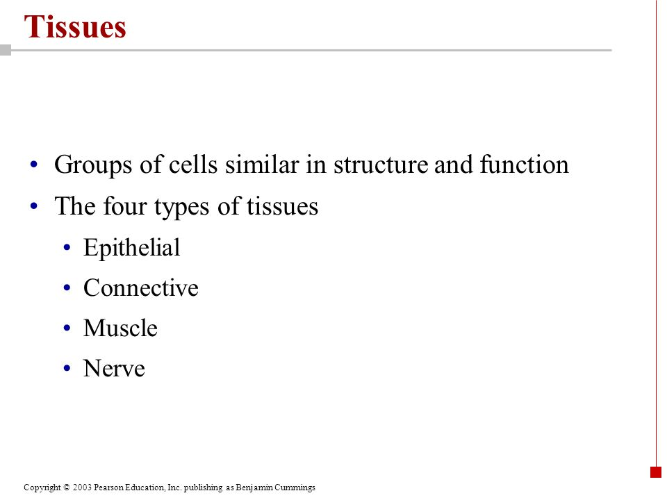 Tissues Groups of cells similar in structure and function