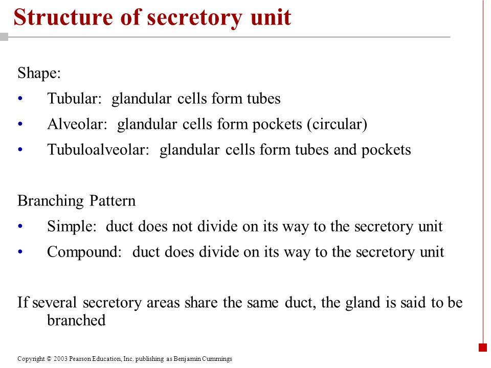 Structure of secretory unit