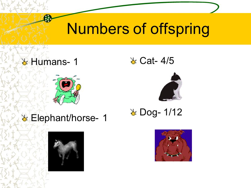 Numbers of offspring Humans- 1 Elephant/horse- 1 Cat- 4/5 Dog- 1/12
