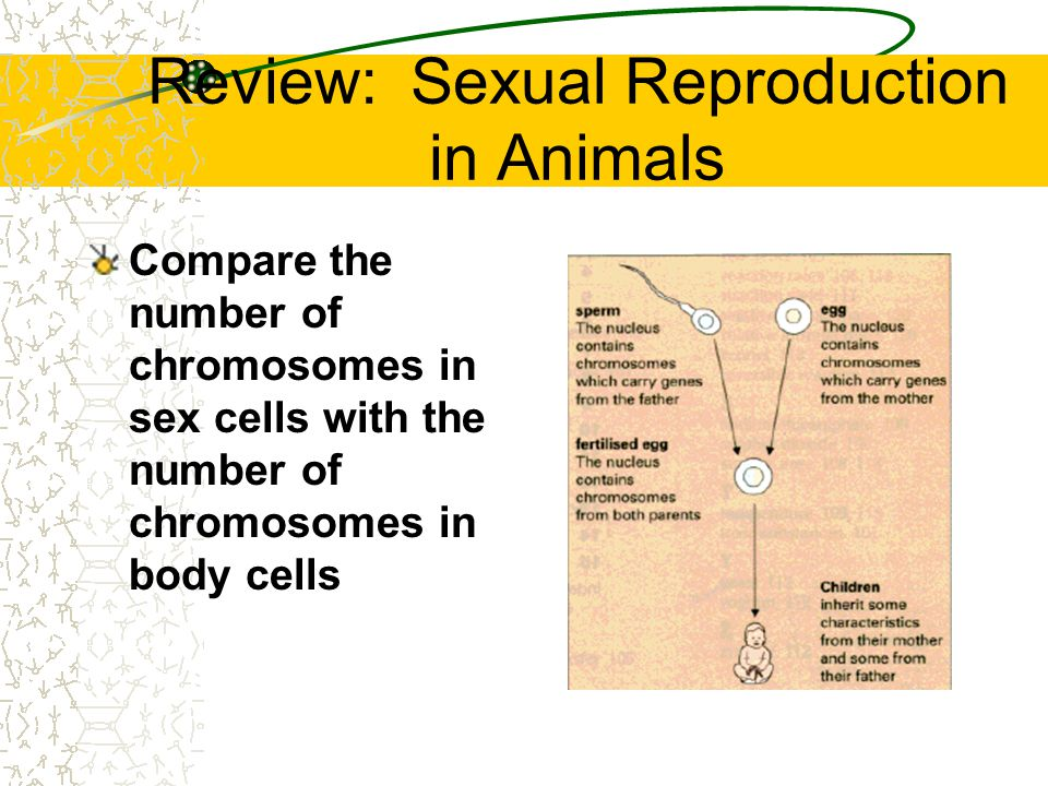 Review: Sexual Reproduction in Animals