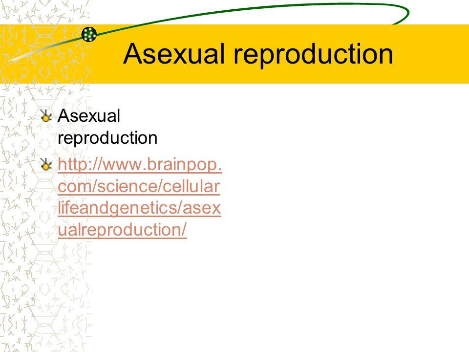 Asexual reproduction Asexual reproduction