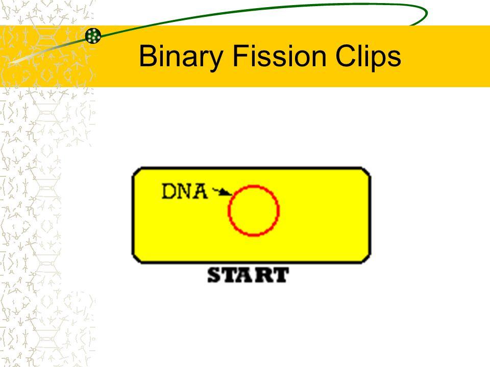 Binary Fission Clips