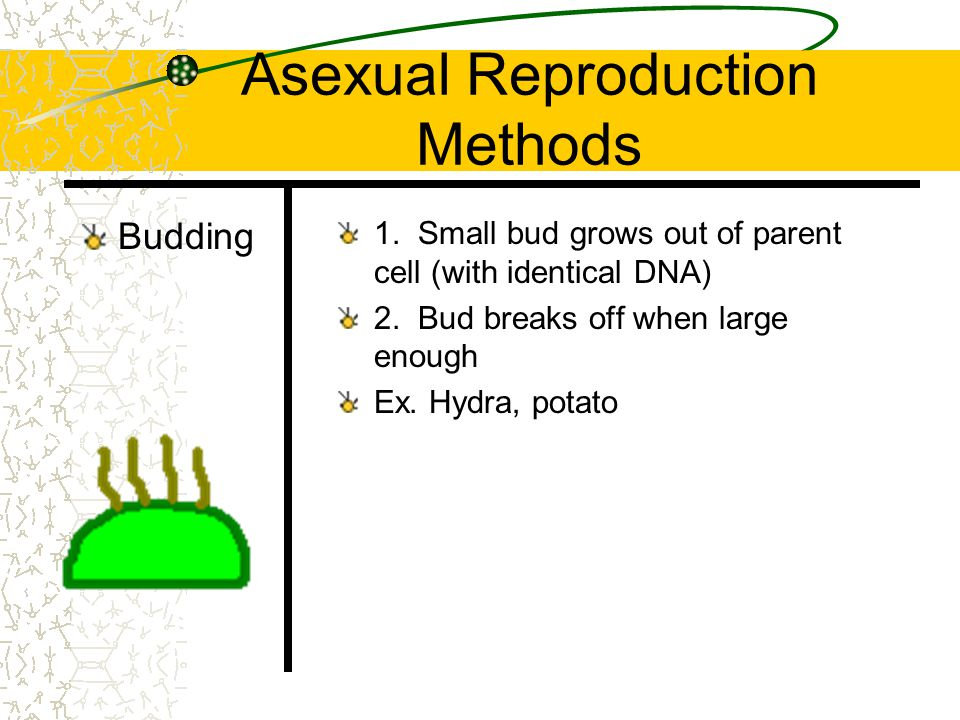 Asexual Reproduction Methods