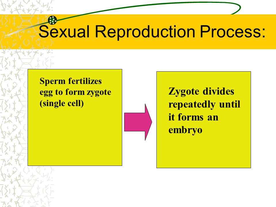 Sexual Reproduction Process: